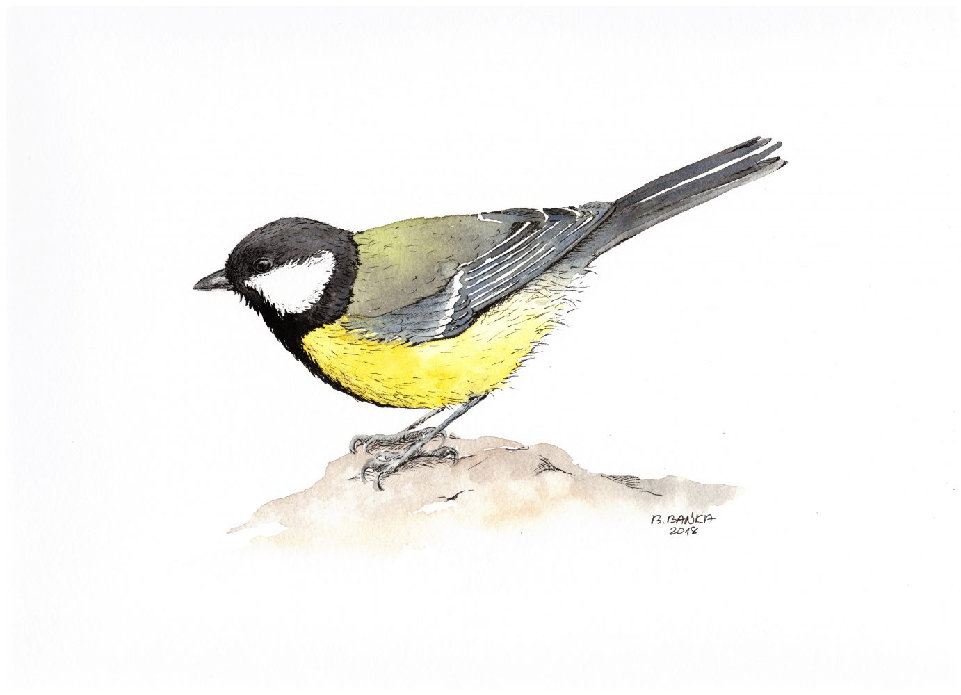 Great tit, 2018 - Barbara Bańka